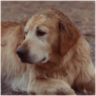 Fifer, 1984 (cropped, feathered).png