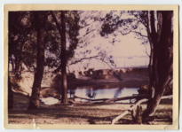 Trees and river, maybe Wongong (full).png